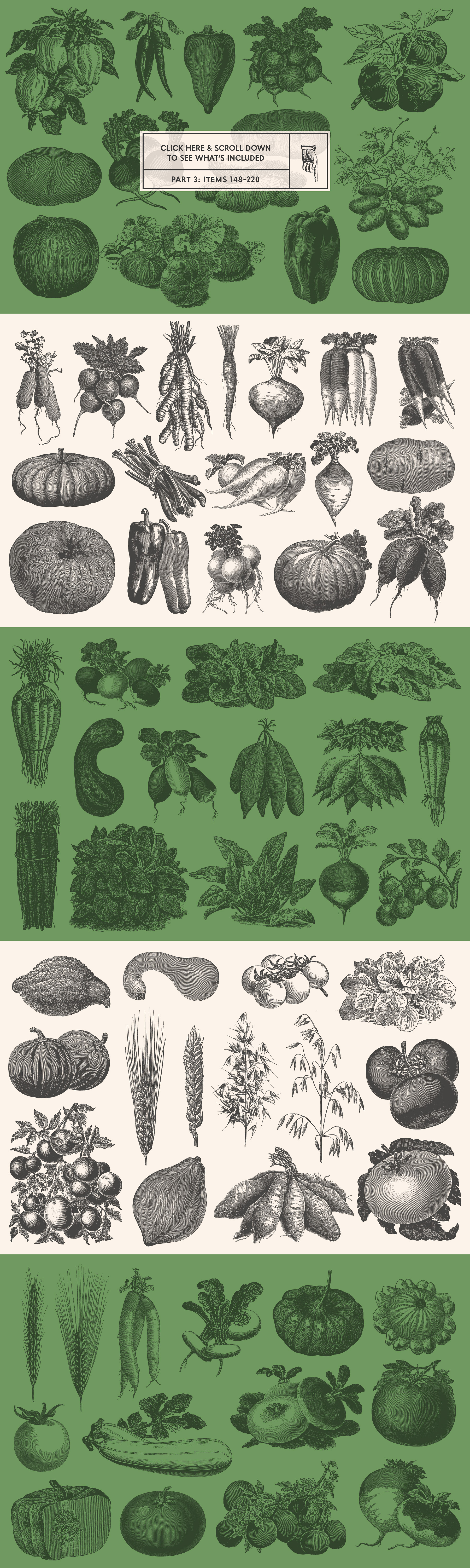 220 Vintage Vegetable Illustrations by Graphic Goods – all items preview 03