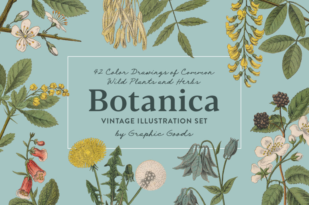 Botanica – Vintage Illustration Set 01