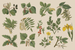 Botanica – Vintage Illustration Set 02
