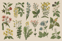 Botanica – Vintage Illustration Set 05
