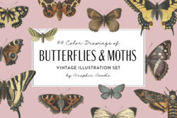 Butterflies and Moths – Vintage Illustrations by Graphic Goods 01