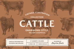 Cattle – Vintage Illustration Set