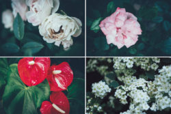 Free Botanical Photo Bundle by Graphic Goods 02