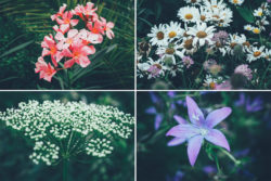 Free Botanical Photo Bundle by Graphic Goods 03