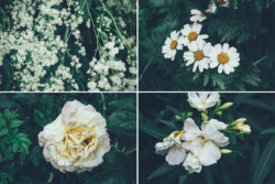 Free Botanical Photo Bundle by Graphic Goods 04