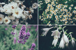 Free Botanical Photo Bundle by Graphic Goods 05