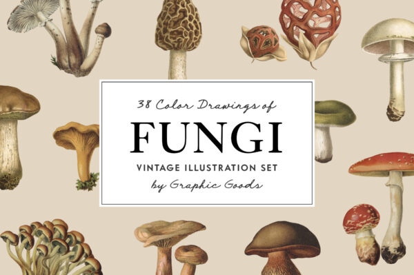 Fungi – Vintage Illustrations by Graphic Goods 01