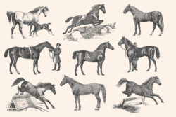 Horses – Vintage Illustration Set by Graphic Goods 04
