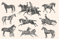 Horses – Vintage Illustration Set by Graphic Goods 06