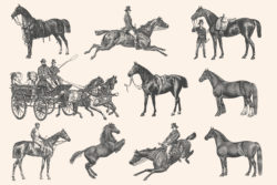 Horses – Vintage Illustration Set by Graphic Goods 08