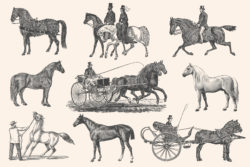 Horses – Vintage Illustration Set by Graphic Goods 10