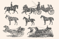 Horses – Vintage Illustration Set by Graphic Goods 12