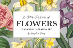 Vintage Color Illustrations of Flowers by Graphic Goods 01