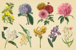 Vintage Color Illustrations of Flowers by Graphic Goods 03