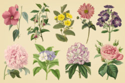Vintage Color Illustrations of Flowers by Graphic Goods 05